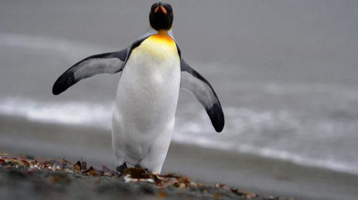 Вывод сайта из-под фильтра пингвин изображение поста
